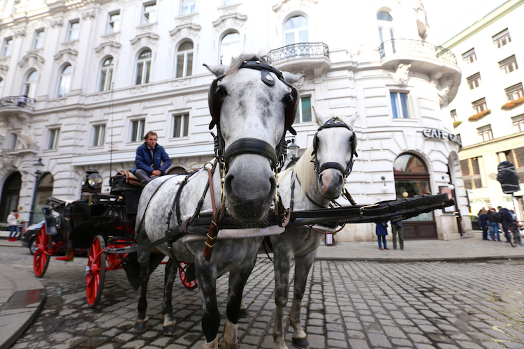 Vienna Carriage
